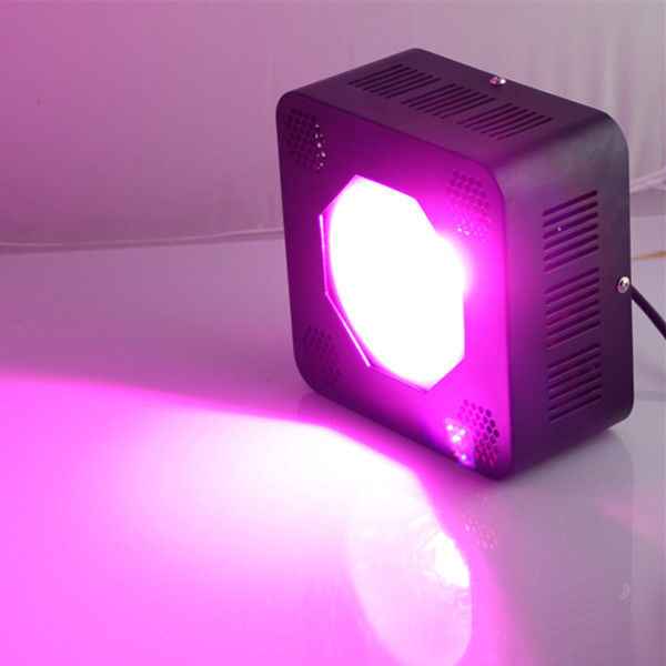 Horticulture Indoor Cree Led Grow Lights For Vegetative